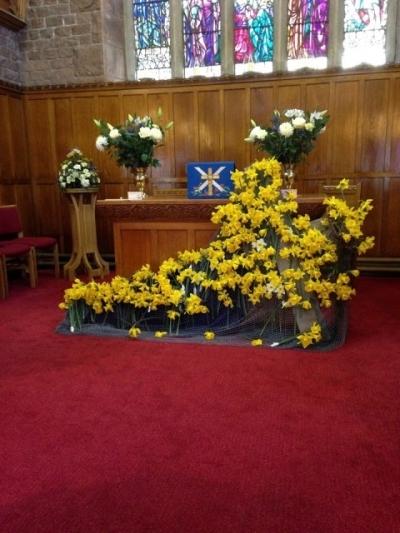 Daffodil-Cross