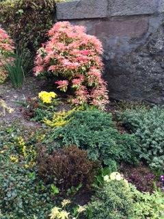 Church Garden June 2016